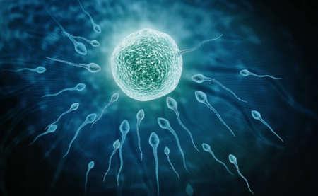 sistema reproductor femenino: Ilustraci�n digital del sistema reproductor femenino en el color