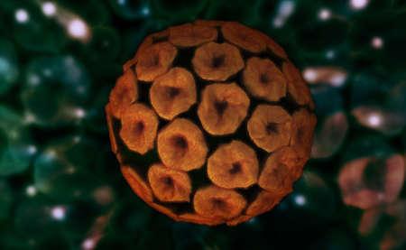 Digital illustration of papilloma virus Stock Illustration - 24272800