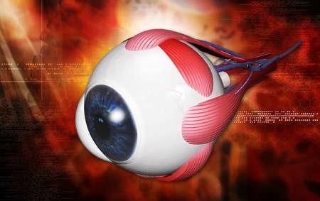 transparent cornea: digital illustration of a human eye in white  Stock Photo