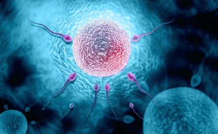 digital illustration of sperm and ovule in colour background Reklamní fotografie - 24426244