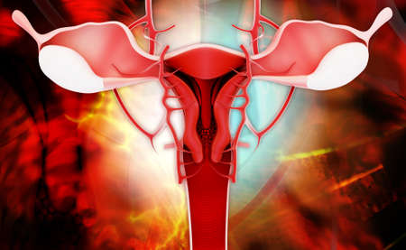 Digital illustration of female reproductive system in coloured background illustration