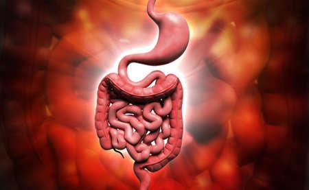 Digital illustration of human digestive system in coloured background