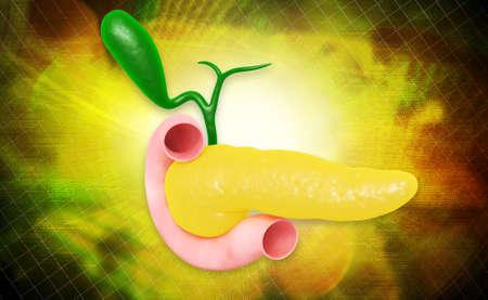 pancreatic: Digital illustration of pancreas in colour background