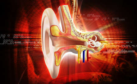 tympanic: Ear anatomy in colour background