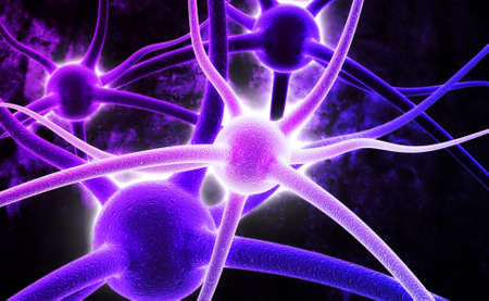 dendrites: Neuron  Active nerve cell in human neural system Stock Photo