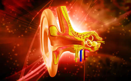 Ear anatomy in colour background photo