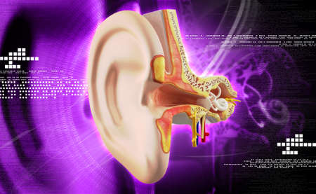 stapes: Ear anatomy in colour background