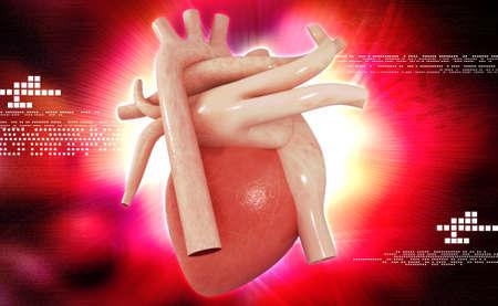 Digital illustration of human heart in colour background illustration