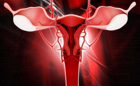 myometrium: Digital illustration of female reproductive system in coloured background