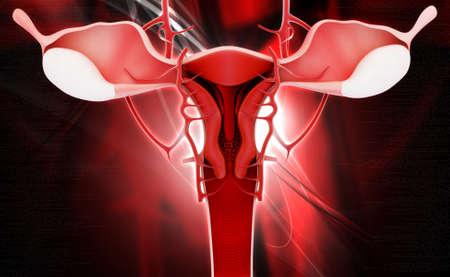 female reproductive system: Ilustraci�n digital del sistema reproductor femenino, en el fondo de color Foto de archivo