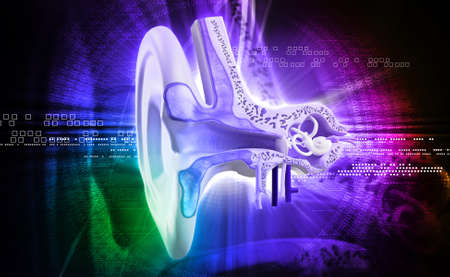 stapes: Digital illustration of Ear anatomy in colour background