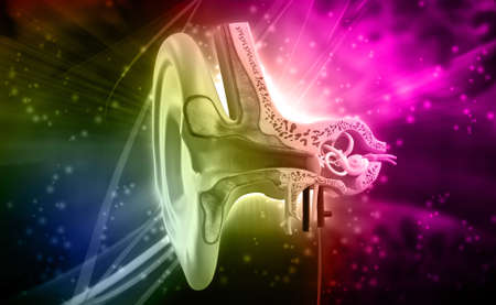 malleus: Digital illustration of Ear anatomy in colour background