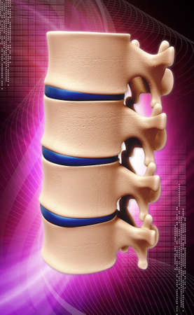 coccyx pain: Digital illustration of human spine in color