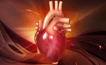 heartattack: digital illustration of a human heart in color