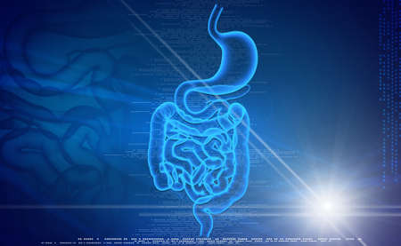 Digital illustration of human digestive system in colored