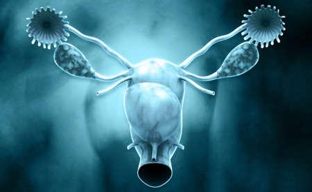 endometrial: Ilustraci�n digital del sistema reproductor femenino en fondo de color