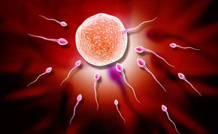penetracion: Ilustración digital de esperma y el óvulo en fondo de color