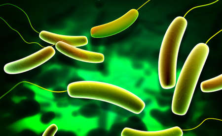 schyzomycete: Digital illustration of Coli bacteria in colour background
