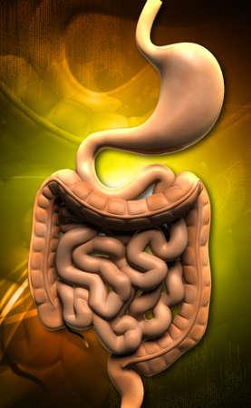 Digital illustration of human digestive system in colour background