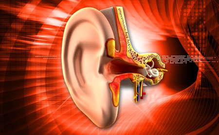 vestibule: Ear anatomy in colour background