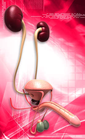 ejaculate: male reproductive system in digital background