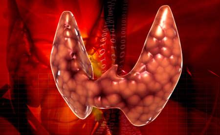 graft: Endocrine parathyroid gland isolated on white background Stock Photo