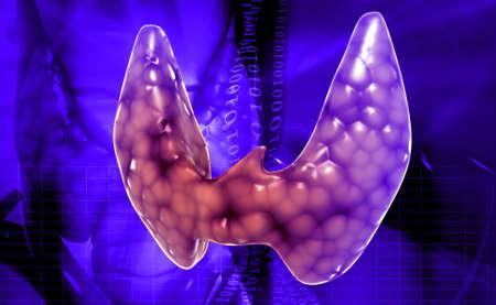 hypothyroidism: Endocrine parathyroid gland isolated on white background Stock Photo