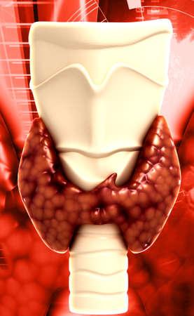 Endocrine parathyroid gland isolated on white background photo