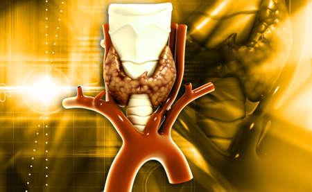 parathyroid: Endocrine parathyroid gland isolated on white background Stock Photo