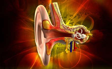 illustration numérique de l'oreille anatomie en couleur de fond
