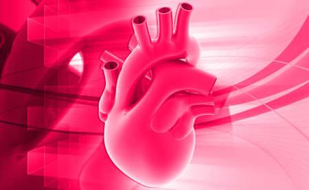 digital illustration of a human heart illustration