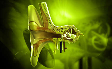 cochlea: Ear anatomy in colour background