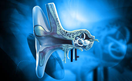 tympanic: Digital illustration of Ear anatomy in colour background