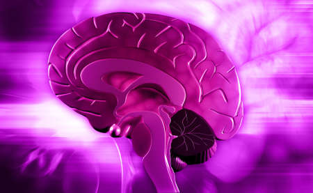 Digital illustration of brain in colour background illustration