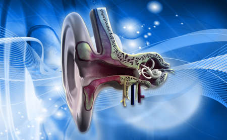 tympanic: Digital illustration of Ear anatomy on colored background