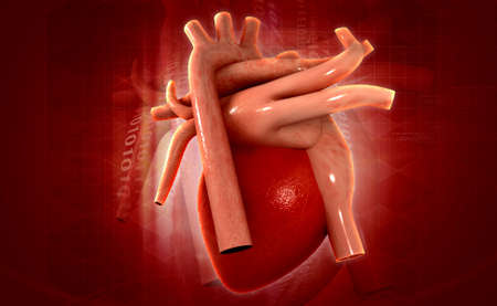heartattack: digital illustration of a human heart in colour background