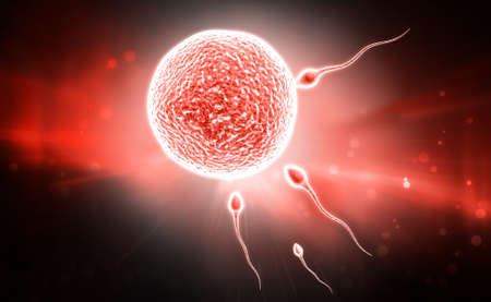 ovule: digital illustration of sperm and ovule in colour background Stock Photo