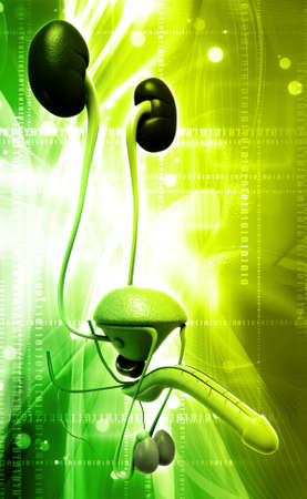 male reproductive system in digital background photo