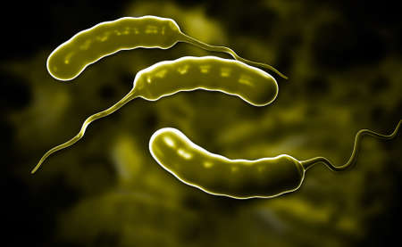 colera: Ilustraci�n digital de la bacteria del c�lera en el color de fondo