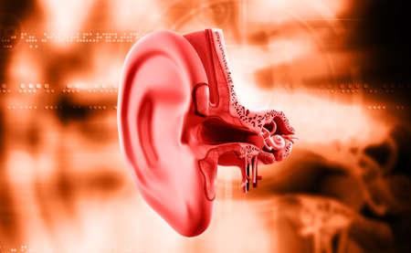 eardrum: digital illustration of Ear anatomy in colour background Stock Photo