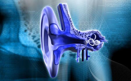 vestibular: digital illustration of Ear anatomy in colour background Stock Photo