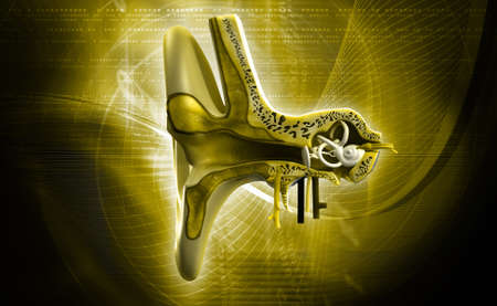 vestibule: digital illustration of Ear anatomy in colour background Stock Photo