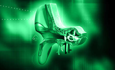 tympanic: digital illustration of Ear anatomy in colour background Stock Photo