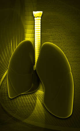 Digital illustration of lungs in colour background illustration