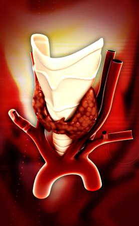 parathyroid: Endocrine parathyroid gland isolated on colour background
