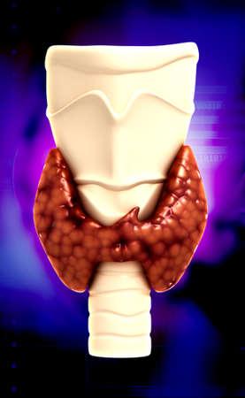 Endocrine parathyroid gland isolated on colour background photo