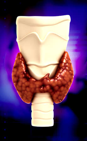 endocrine: Endocrine parathyroid gland isolated on colour background