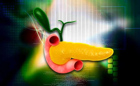pancreas: Digital illustration of pancreas in colour background