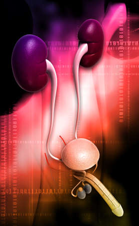 midsagittal: male reproductive system in digital background