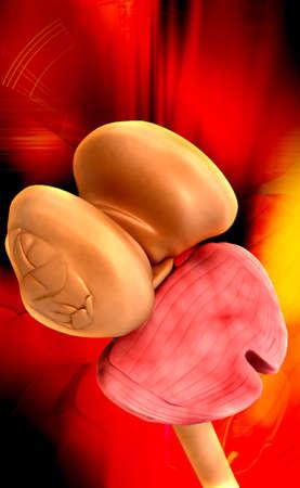 thalamus: M�dula espinal t�lamo y el cerebelo en el fondo de color